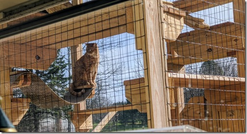 Milo in the catio